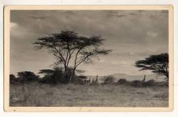 Congo Zagourski Afrique Qui Disparait  N° 193  Kenya Girafes - Congo Belge - Autres