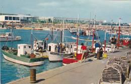 20899 Royan, Un Coin Du Port Peche -4856 Berjaud -bateau Peche M8096 -le Corail - Cote De Beaune -la Regate