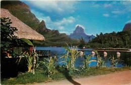 : Réf : L-12-1685  : Mooréa - Polynésie Française