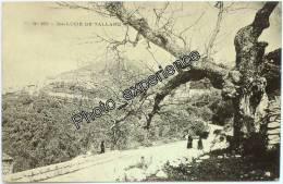 CPA 1900 SAINTE LUCIE DE TALLANO Corse Du Sud 20 France - Autres Communes