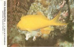 CALENDARIO DEL AÑO 1987 DE PEZ  (FISH) (CALENDRIER-CALENDAR) - Tamaño Pequeño : 1981-90