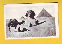 Postcard - Egypt    (7517) - Unclassified