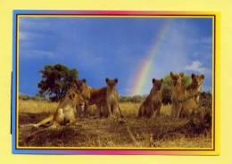KENYA  -  LION PRIDE - Kenya