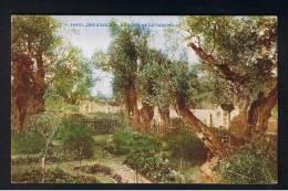 RB 891 - Early Postcard - Garden Of Gethsemane Jerusalem - Palestine Israel Holyland - Palestine
