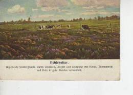 HEIDEKULTUR   OHL - Landbouw