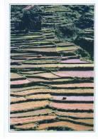CARTE FICHE   BHOUTAN        RIZIERES DANS LA VALLEE DE LA SANKOSH - Bhoutan