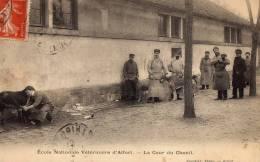 ALFORT  école Nationale Vétérinaire - France
