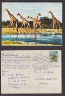 SOUTH WEST AFRICA: GIRAFFE, Used 1980 - Namibia