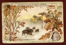 Rare Chromo Liebig  Les Sangliers A Travers Champs Et Forêts      Lot No 7 - Liebig