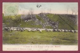 ROUMANIE - 121012 - O Turma De Oi La Muntele Leresti (jud. Muscel) - Roemenië
