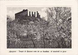 AGRIGENTO 1955 TEMPIO DI GIUNONE VISTO DA UN BOSCHETTO DI MANDORLI IN FIORE - Agrigento
