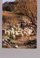 3057 Les Belles Images De Provence Moutons Au Printemps - Elevage