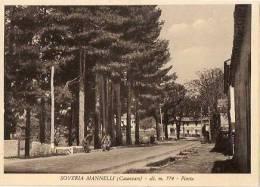 SOVERIA MANNELLI ( CATANZARO ) PINETA - Catanzaro