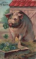 OLD PIG 1910-bad Condition But GREAT PIG :-) - Schweine