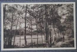 CPA 72 VIBRAYE FORET ETANG DE LA COUR DES BOIS 1953 - Vibraye