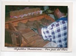 REF 84 CPM Carte Postale  Grand Format Republique Dominicaine Fabrication De Cigares Cigare Otro Pais Del Puro Tabac - Dominicaine (République)