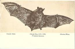 Albrecht Dürer - Fledermaus         1921 - Animaux & Faune