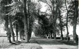 62 ARDRES Avenue Des Tilleuls - Ardres