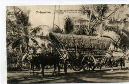 COLOMBO - Ceylan Attelage De Boeufs - Sri Lanka (Ceylon)