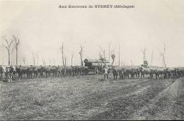 210Si     Australie Environs De Sydney Attelages De Boeufs Transport Du Bois (DND En TBE) - Australie