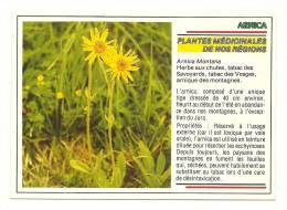 Cp, Fleurs, Plantes Médicinales De Nos Régions - Arnica - Fiori, Piante & Alberi