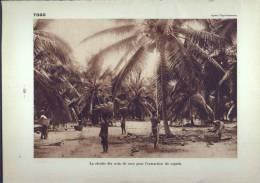 De 1931 - 81 Ans D´âge - TOGO - La Récolte Des Noix De Coco,pour L'extraction Du Coprah - DAHOMEY - Abomey, Prince Indig - Repro's