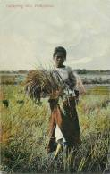 : Réf : L-12-2071  :   Philippines Gathering Rice - Philippines
