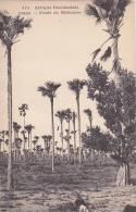 Senegal Foret de Rhoniers