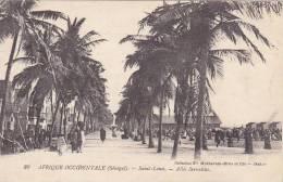 Senegal Saint-Louis Allee Servatius - Senegal