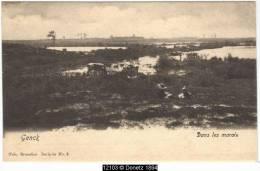 12103g MARAIS - Genck - Bétail - Genk