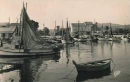 LES SALINS D'HYERES - Le Port - France
