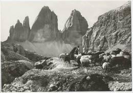 AURONZO DI CADORE TRE CIME DI LAVAREDO Vera Foto C. 1960 - Italia