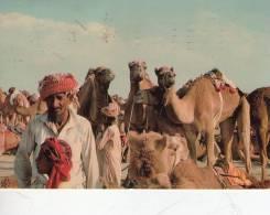 UNITED ARAB EMIRATES - Emirati Arabi Uniti
