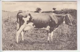 A Guernsey Cow - Guernsey