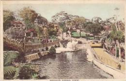 AUSTRALIA SYDNEY ZOOLOGICAL GARDENS Nice Postcard - Sydney