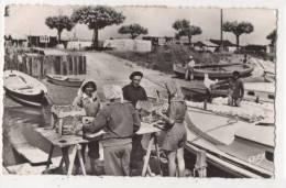 Bassin D'ARCACHON - Le Triage Des Huîtres - Arcachon