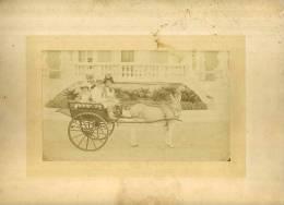 - ENFANTS SUR UNE  CHARETTE AVEC UN ANE . DATEE AU DOS 23 AOUT 1885 ET SIGNEE J. AYANE ? . - Fotos