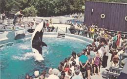 """Skana"" The Killer Whale, Vancouver , B.C. , Canada , 50-60s - Vancouver"