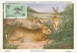 D08840 CARTE MAXIMUM CARD 1967 BULGARIA - HARE LIÈVRE LEPUS - CP MUSEUM ORIGINAL - Rodents