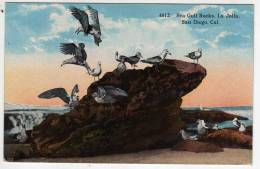 Ca - Sea Gull Rocks - La Jolla - San Diego - California - San Diego