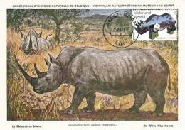 D08876 CARTE MAXIMUM CARD FD 2011 NETHERLANDS - WHITE RHINO CP MUSEUM ORIGINAL - Rhinozerosse