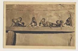 Monkeys - Insel Brioni I.d. Adria, Szene Aus Der Affenschlucht - Monkeys