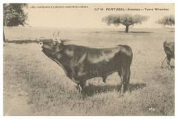 COSTUMES - PORTUGAL - ALENTEJO Touro Mirandez Carte Postale - Non Classés