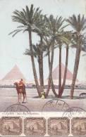 Egypte - Le Caire Cairo - Alexandria  - Pyramides -  Postal Mark Alexandria  1908 - Carte Maximum - Egypt