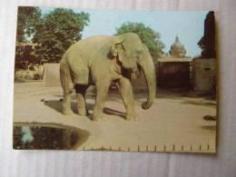 Elephant   -Indian Elephant  1976   D83266 - Elephants