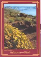USA - Arizona - Utah - Lake Powel - Lake Powell