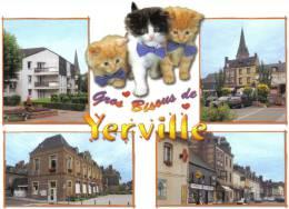 Carte Postale 76. Yerville  Petits Chats Trés Beau Plan - Yerville
