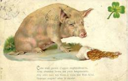 N°25555 -cpa Cochon - Cochons
