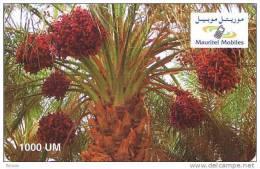 Mauritania, 1.000 UM Recharge Card C, 2 Scans. - Mauritania