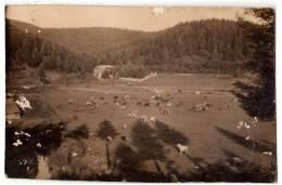 EUROPE BOSNIA GLAMOČ COUNTRY SIDE OLD POSTCARD - Bosnia And Herzegovina
